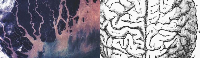 river-brain